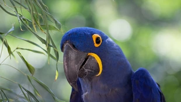 revealed-8-tips-to-help-you-select-the-best-exotic-pets