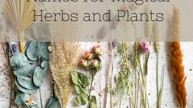 the-secret-names-of-magical-herbs-and-plants