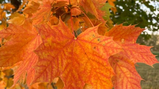 run-on-rumination-autumnal-appreciation