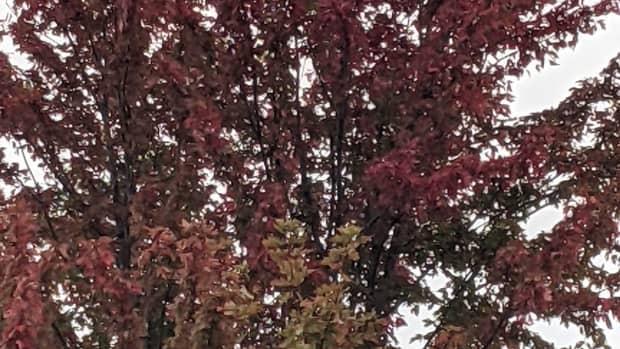 fall-in-minnesota-autumn