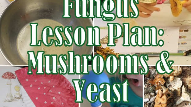 mushroom-lesson