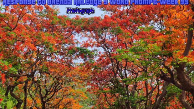 poem-photograph-of-a-beautiful-autumn-morning-response-to-brenda-arledges-word-prompt-week-33-photograph