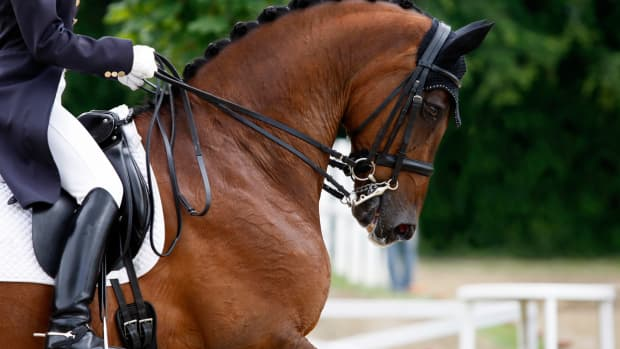 horse-showing-fundamentals