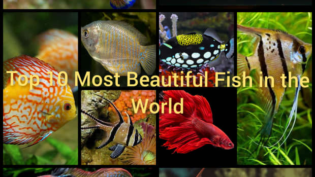 top-10-most-beautiful-fish-in-the-world