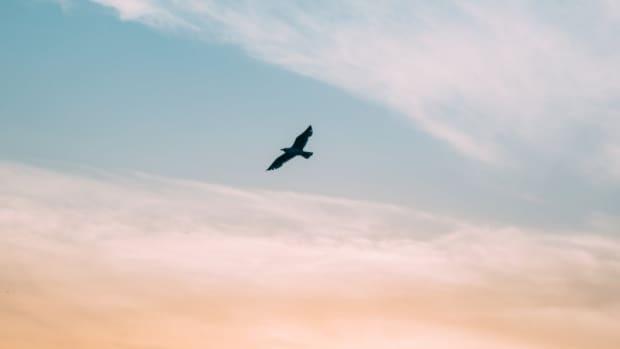 a-birds-delight
