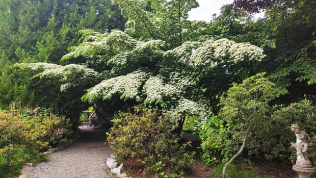 trees-and-shrubs-with-edible-red-fruits-for-birds-and-you