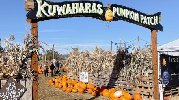 best-pumpkin-patch-at-kuwaharass-pumpkin-patch-and-thriller-park