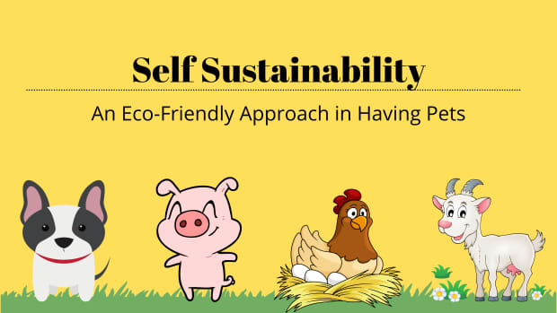 self-sustainability-an-eco-friendly-approach-in-having-pets