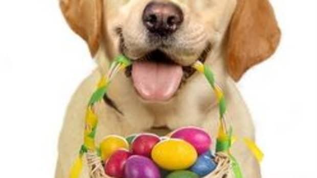 dog-easter-basket