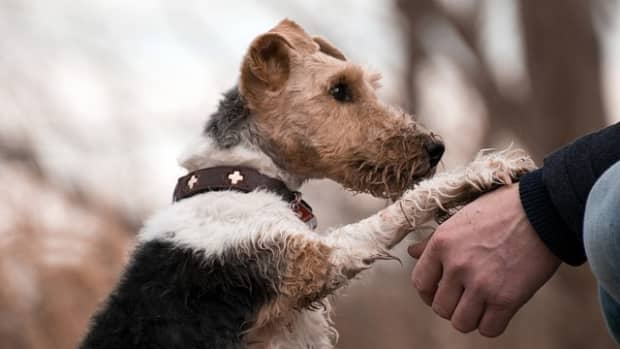 how-to-stop-dogs-from-pawing-and-scratching-at-people