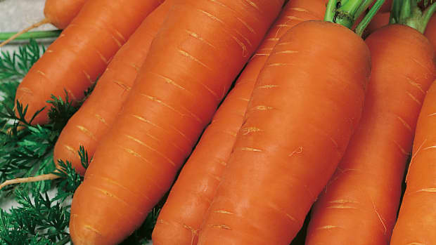 everything-you-need-to-know-about-carrots-the-perfect-health-food
