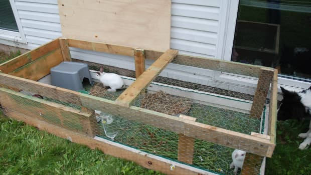 raising-rabbits-for-meat-an-urban-guide