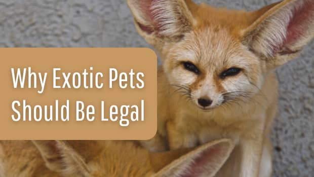 10-fast-reasons-why-exotic-pets-should-be-legal