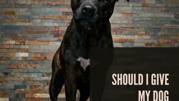 is-baby-aspirin-safe-to-give-my-dog