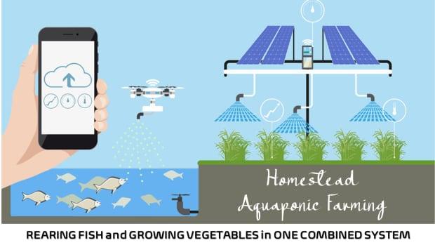 homestead-aquaponic-farming