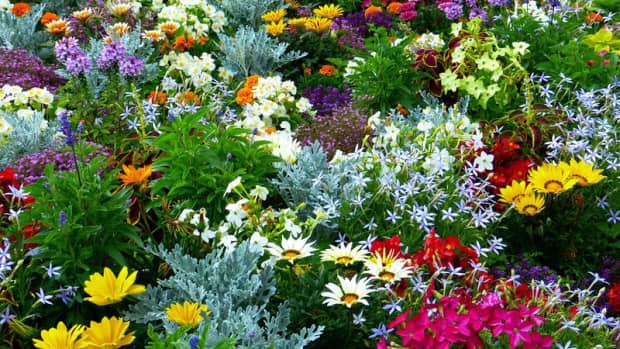 plants-to-grow-in-summermarch-april0-so-as-to-get-flowers-till-winter-october