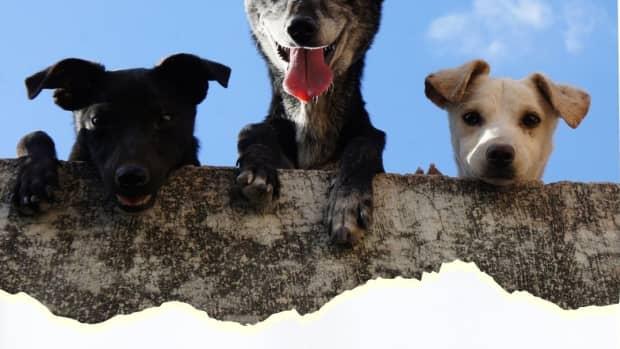 do-rescue-animals-make-better-pets