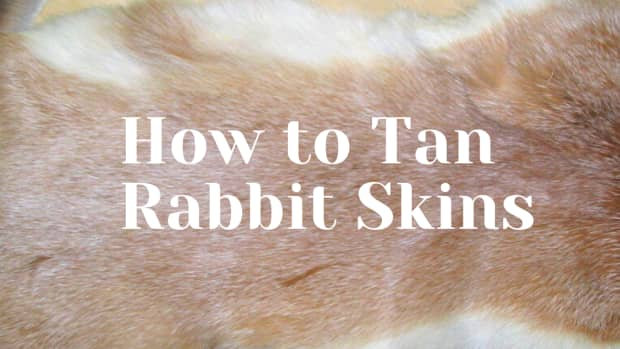 how-to-preserve-and-tan-skins-meat-rabbits