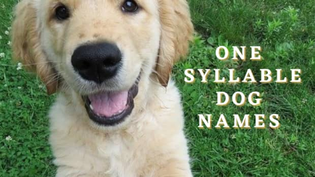 350-one-syllable-dog-names-with-meanings