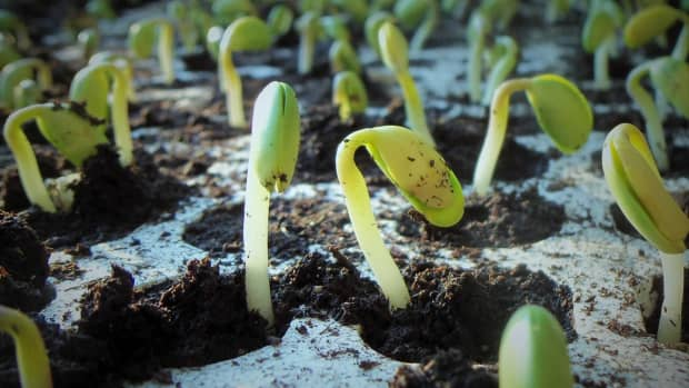 five-tips-to-start-from-seeds-indoors