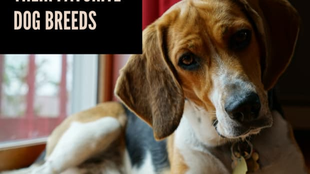 popular-dog-breeds-and-their-celebrity-owners