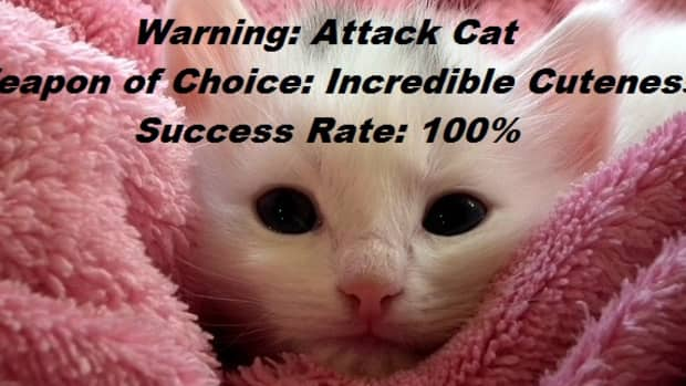 funny-cat-memes-about-cat-behavior