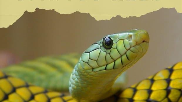 first-few-days-new-pet-snake