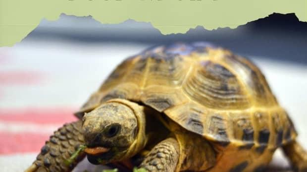 home-made-aquatic-turtle-food-recipe