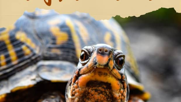 the-dos-and-donts-of-turtle-care