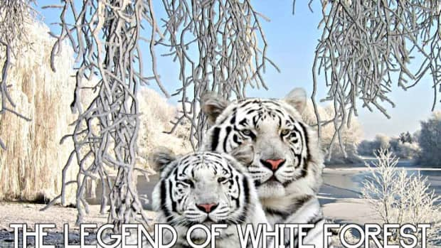the-legend-of-white-forest-10