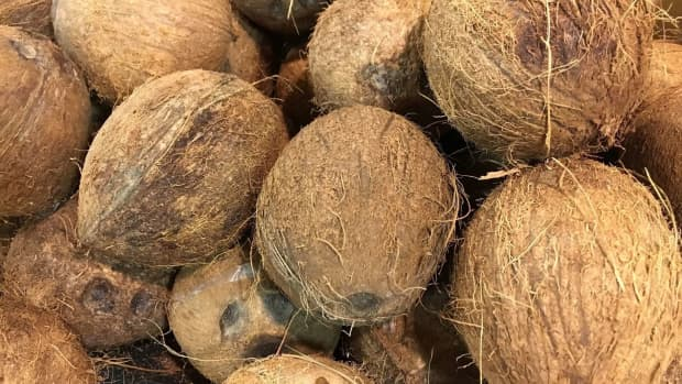 the-coconut-fruit