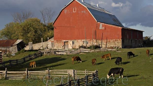 my-farm-life-chapter-6