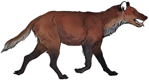 dire-wolf-facts-an-ancient-animal-in-the-family-canidae