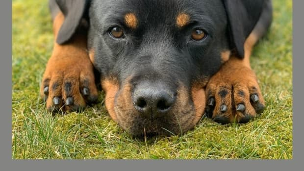 8-worlds-most-dangerous-dogs-you-must-fear