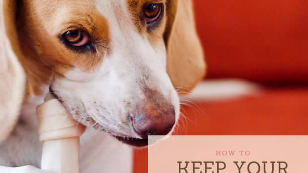 how-to-protect-your-dog-from-tooth-and-gum-disease