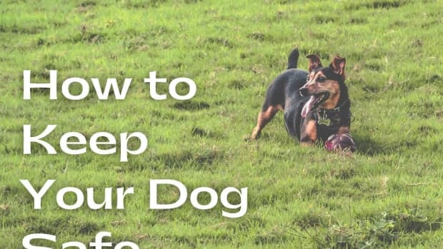 keeping-your-pets-safe-outdoors