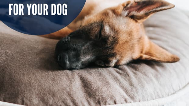 how-to-choose-a-good-dog-bed