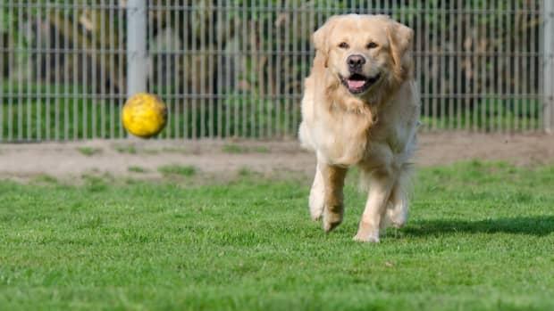 the-incredible-benefits-of-dog-runs