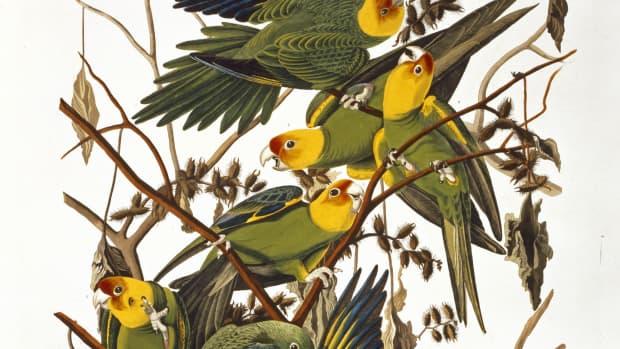 birds-extinct-and-endangered