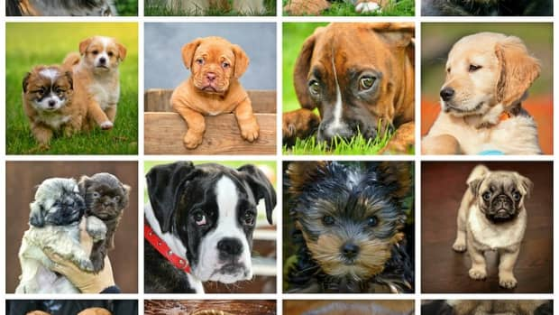 top-10-best-dog-breeds-to-own-with-family-and-kids
