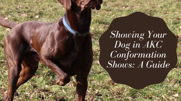 so-you-think-you-want-to-show-your-dog-in-akc-shows