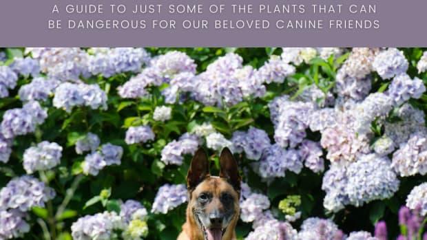 dangerous-plants-to-dogs