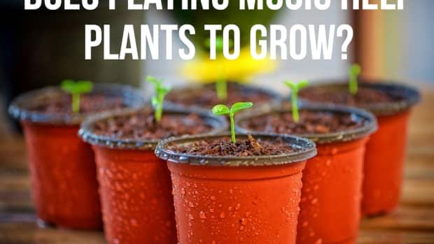 playing-music-to-help-plants-grow