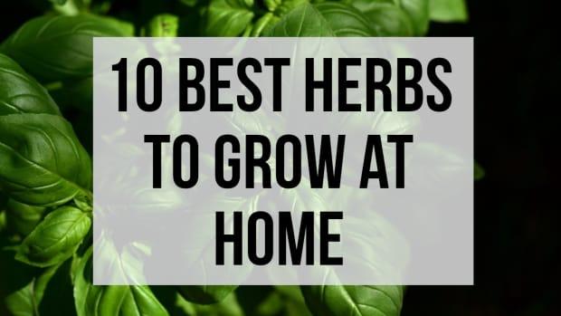 best-herbs-to-grow-indoors