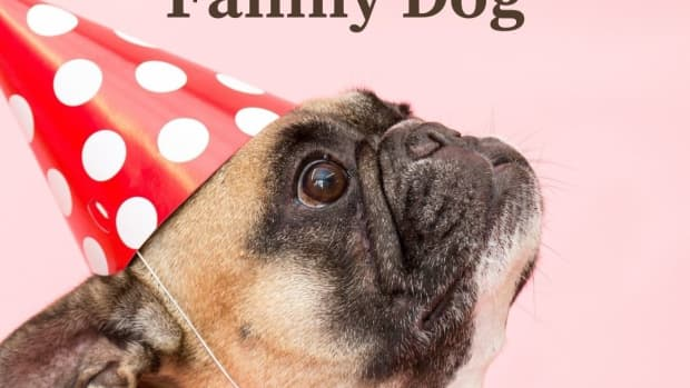 why-pugs-dogs-are-the-perfect-family-pet