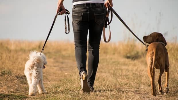 tips-on-how-to-walk-two-dogs-at-once