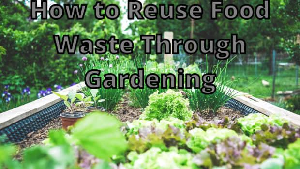 grow-a-zombie-garden