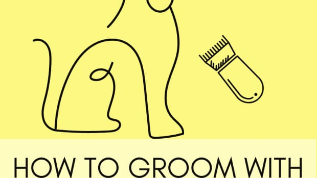 grooming-lessons-from-a-real-groomer-lesson-6-clipper-tips-and-tricks