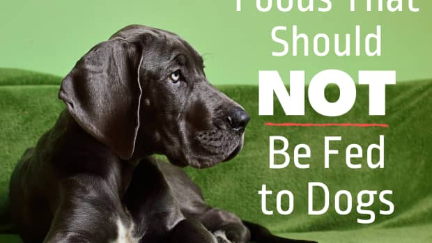 dog-food-what-not-to-feed