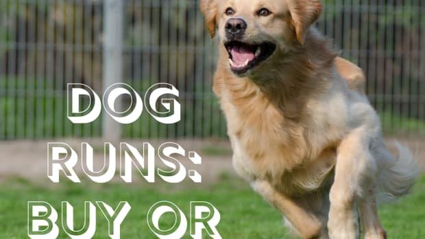 dog-runs-build-or-buy-an-outdoor-dog-kennel-run